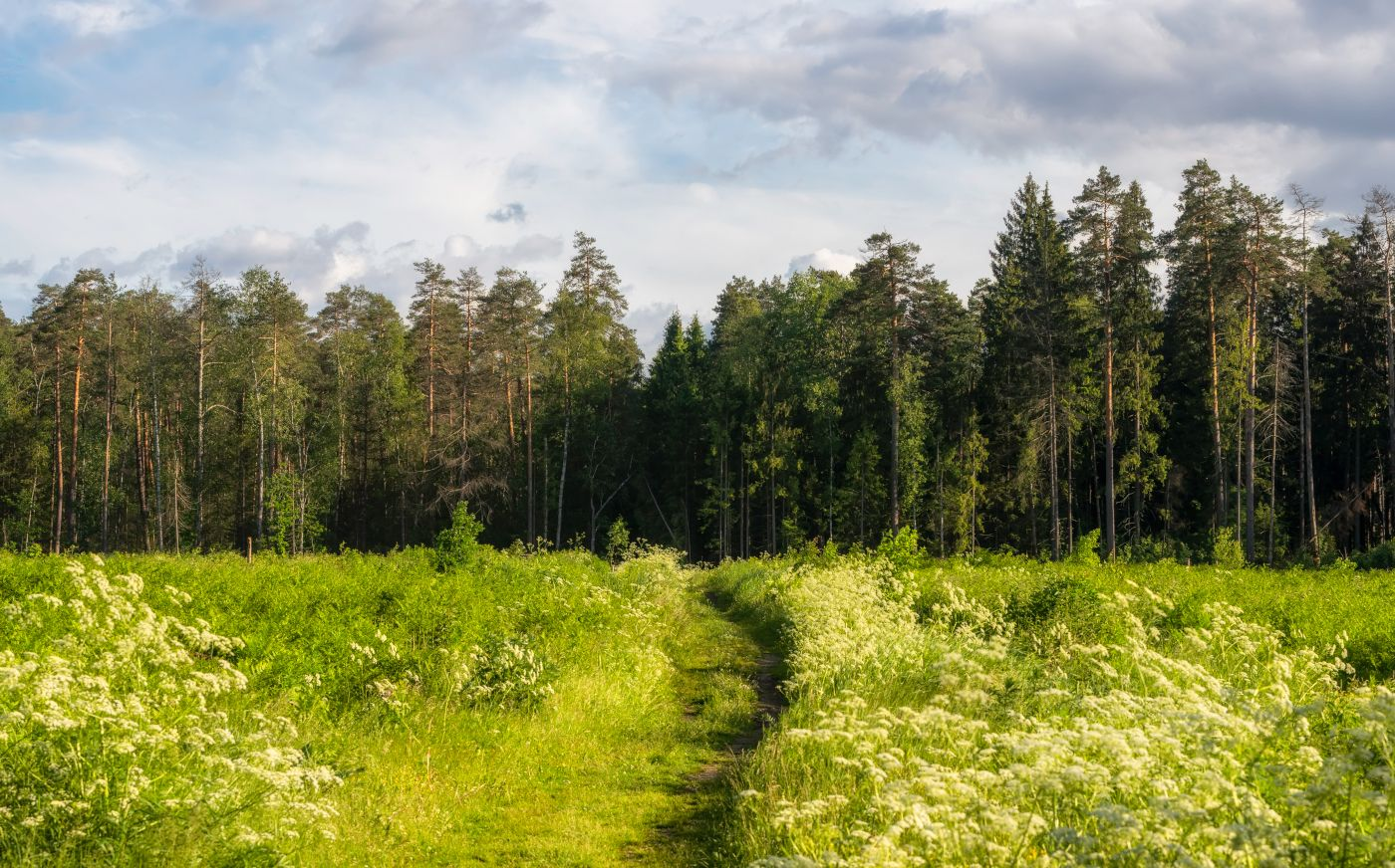 Лесной массив в средней полосе