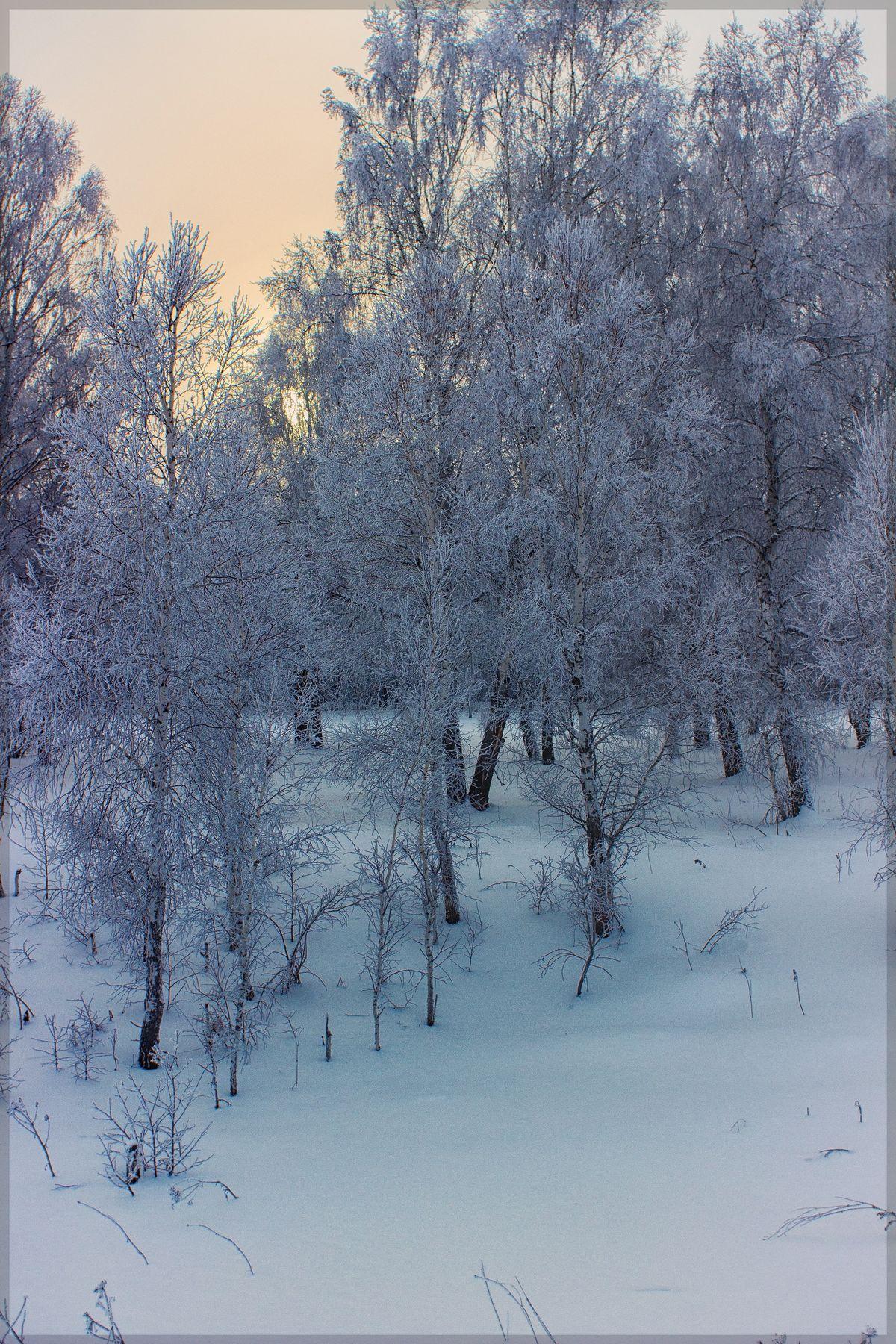 -40 *С для съемок не помеха ) Зима Ачинск Сибирь Березы мороз