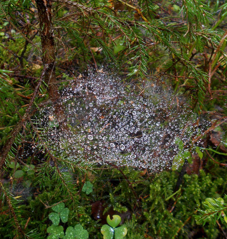 галактика лес лето паутина дождь