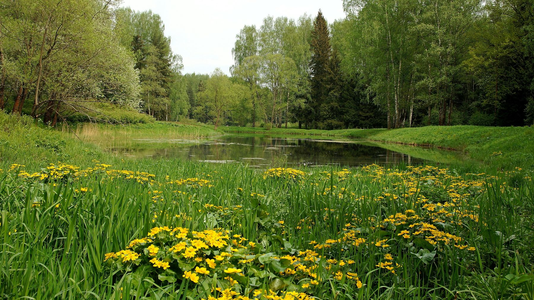 Пруды Павловского парка Павловский парк весна пруд лес