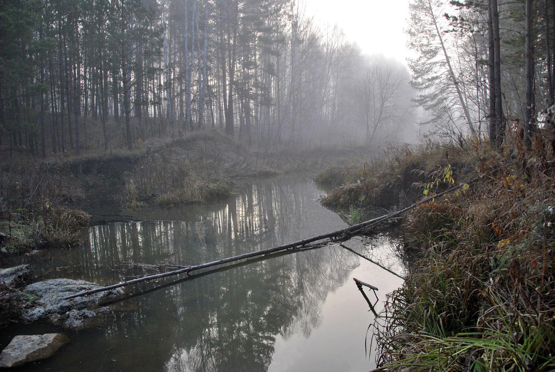 Потаенный уголок Речка туман сосны