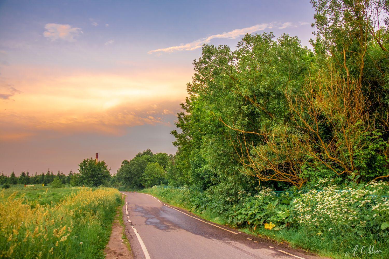 Стихия  ушла поле лес дорога деревья ива травы вечер облака закат лужи