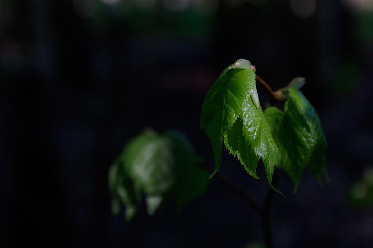 Лиственный портрет листья лес лето весна темнота утро