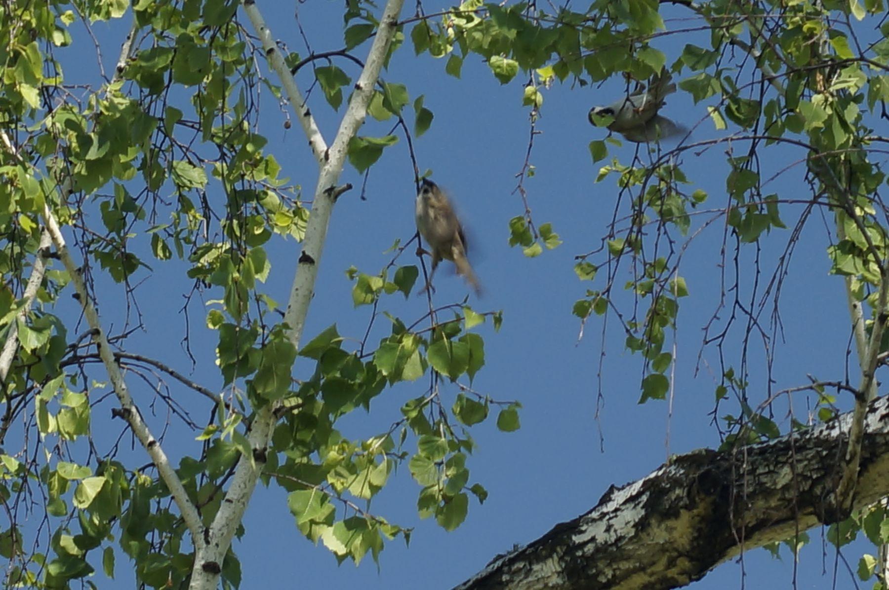 Остановись мгновение птицы лето лес береза