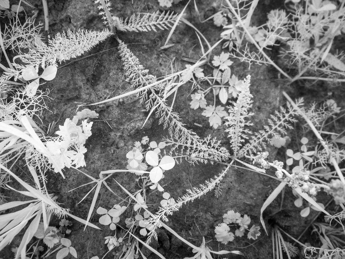 Лето под ногами когда позовет тебя море трава ромашки ладога ir карелия растения