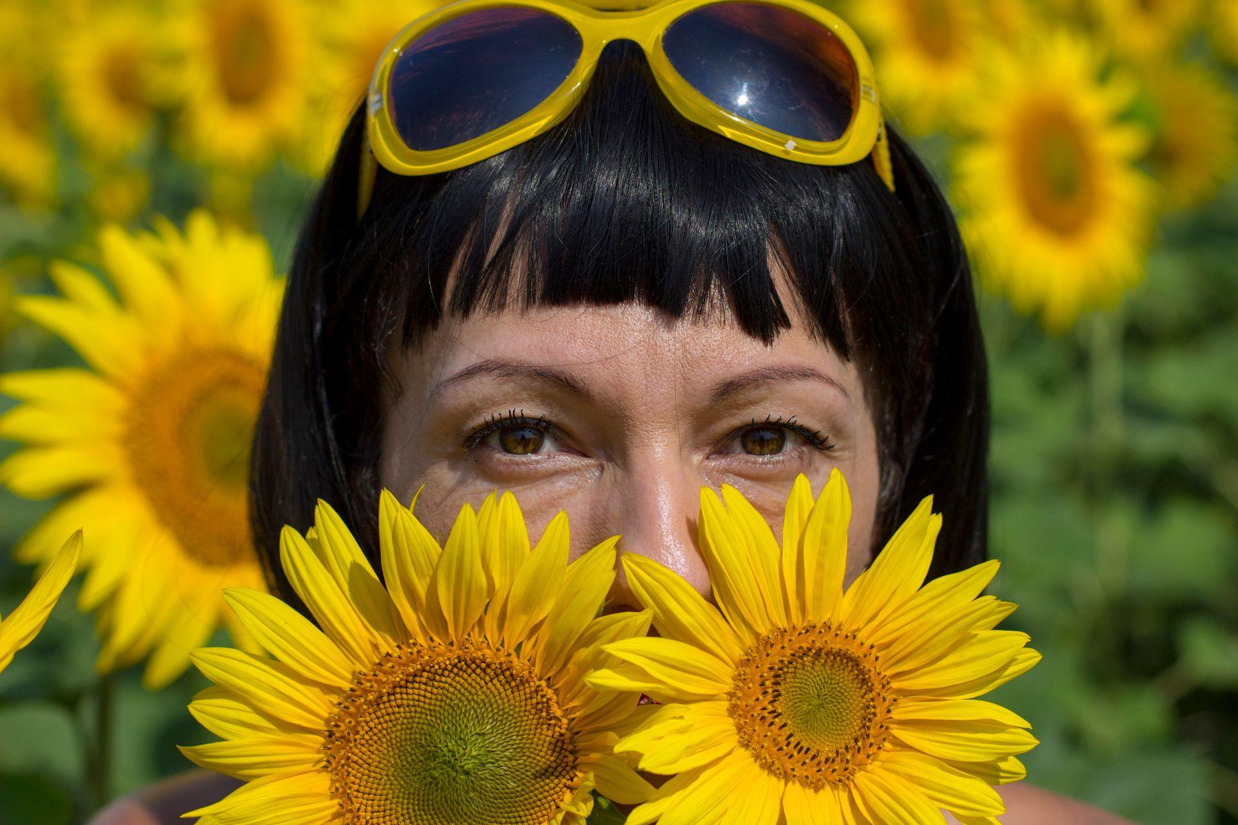 подсолнухи цветут подсолнух портрет лето