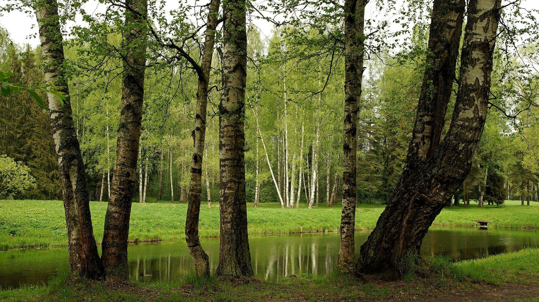 Пруды Павловского парка 3 Павловский парк весна пруд лес
