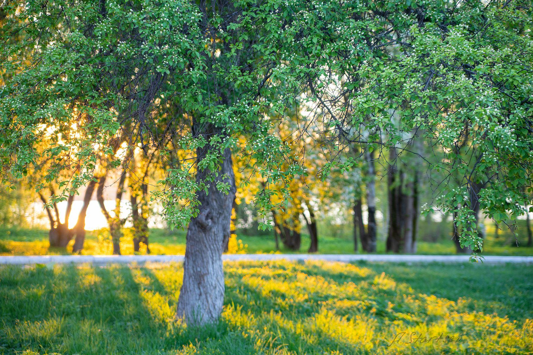 Майский вечер весна вечер дерево деревья пейзаж природа Пермский_край Лысьва солнце