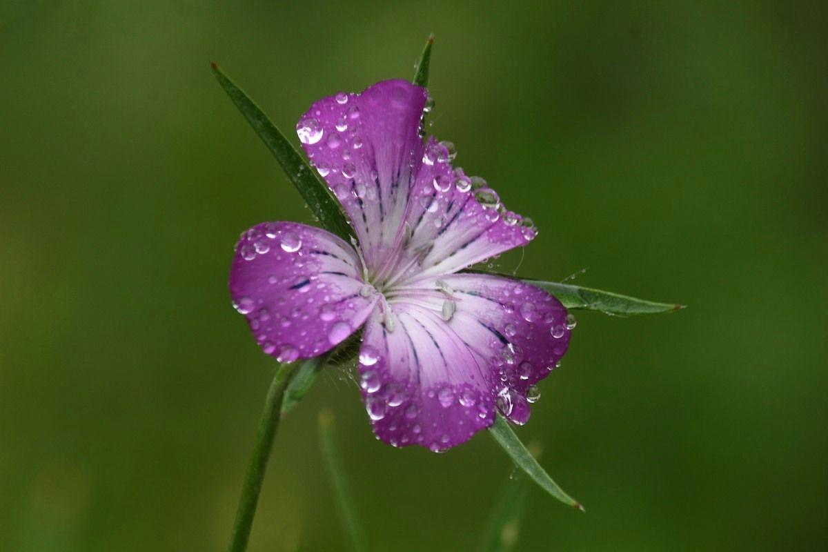 Утренний цветок Утро цветок роса