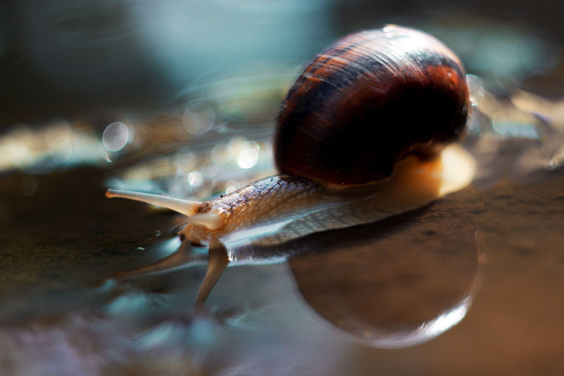 On Its Way snail shell water wet bokeh light shine reflection horns blue teal orange yellow brown house look вода улитка раковина мокрый рожки отражение голубой оранжевый боке свет deep dark