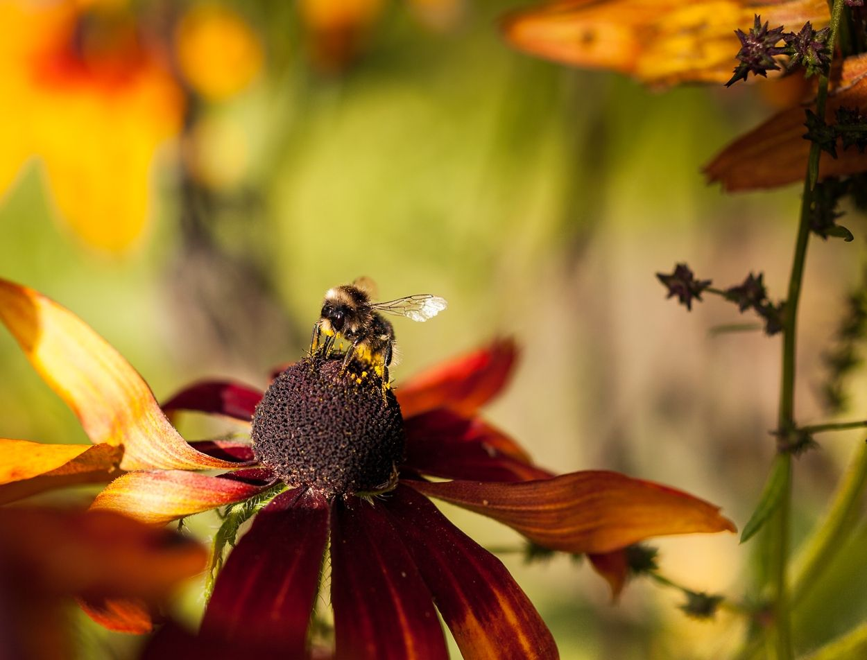 Уж отцветает всё, собрать бы остатки макро природа цветы
