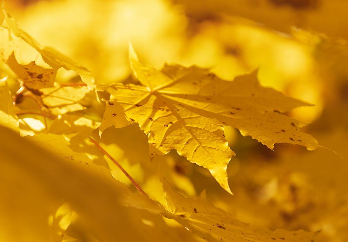 И снова осень нам танцует вальс-бостон...
