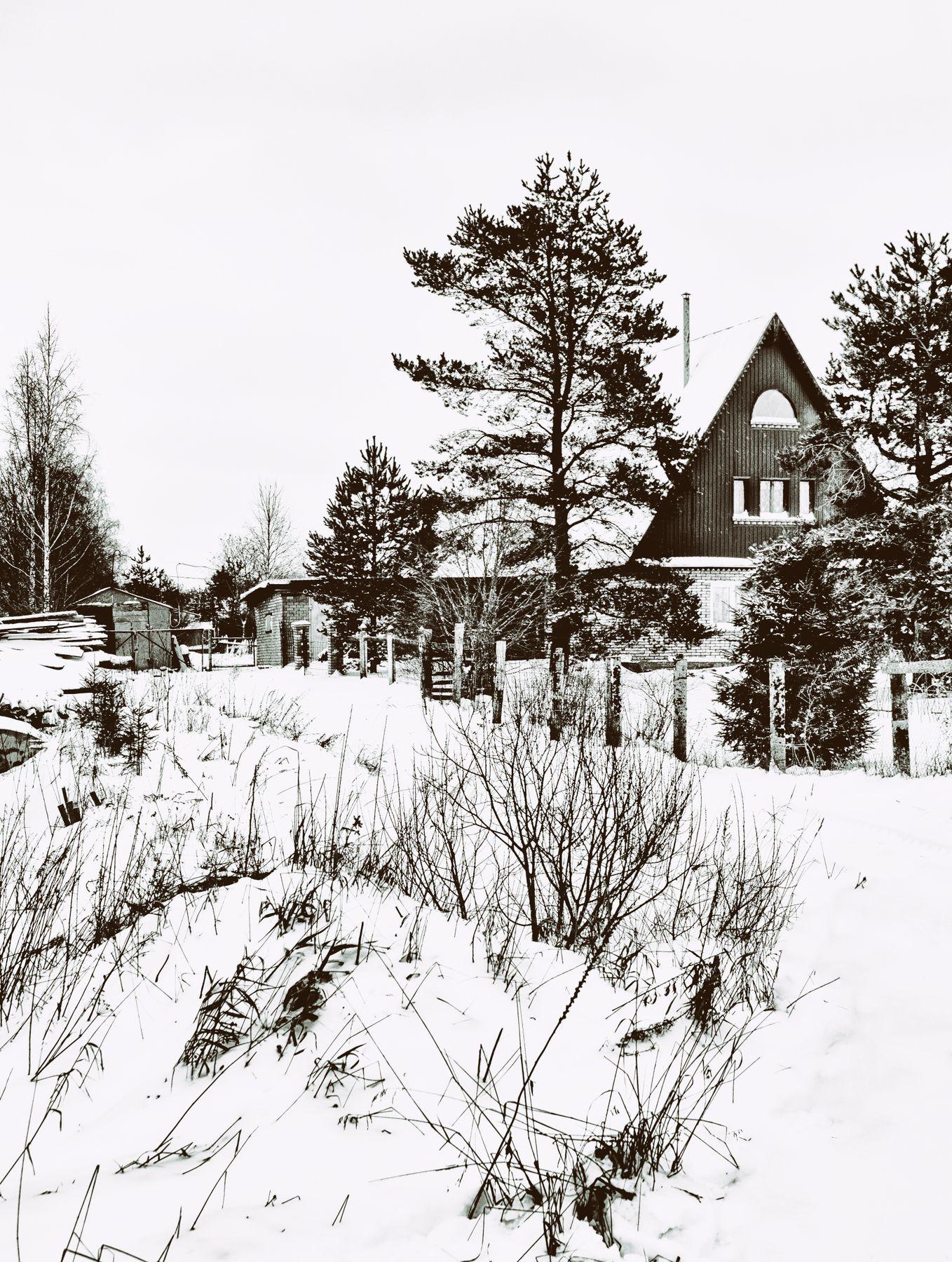 *** лес дом зима
