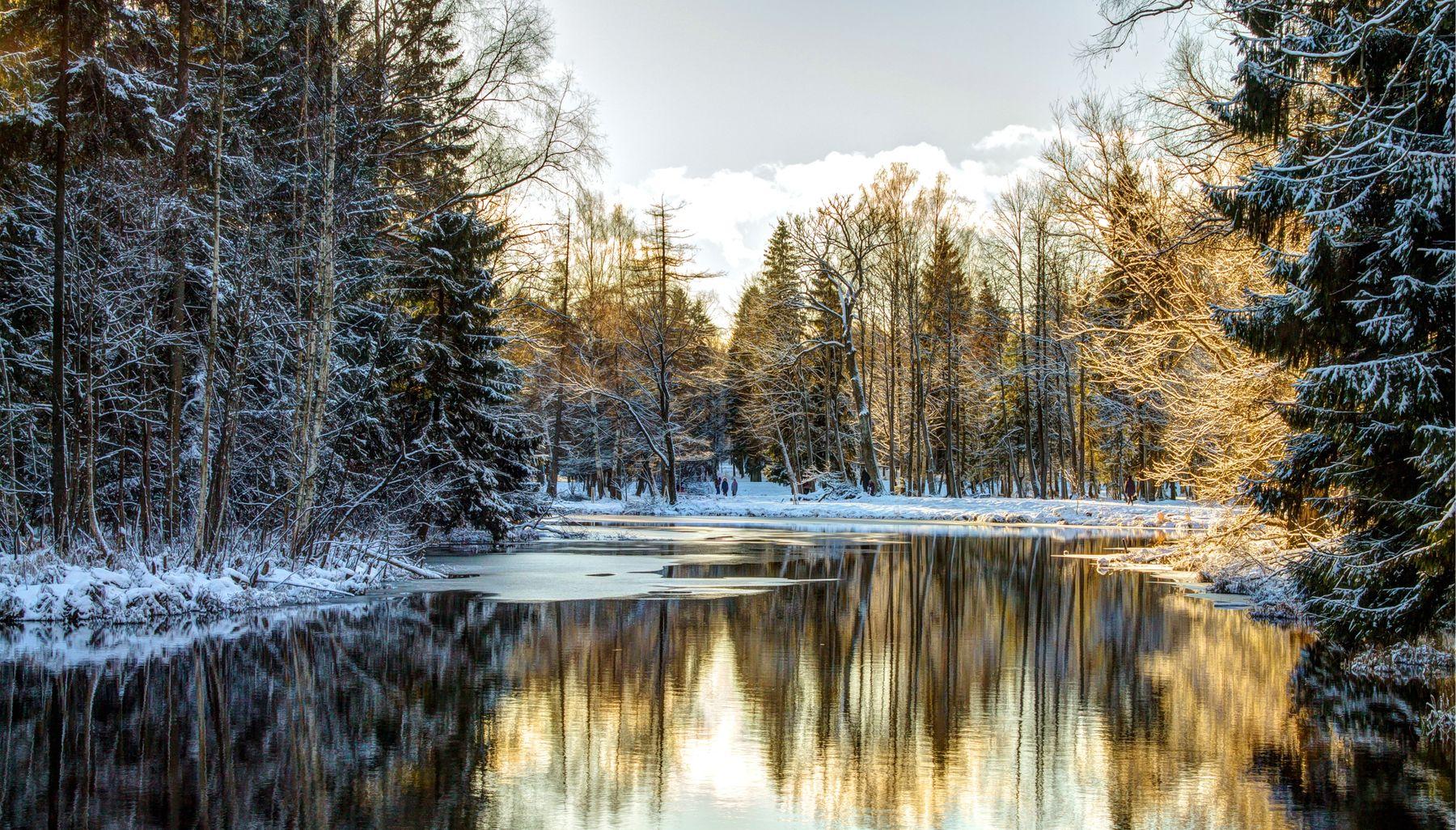 *** гатчина парк зима январь