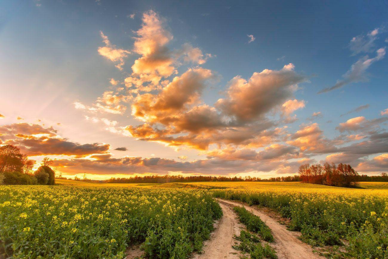 Майский вечер Беларусь Весна Вечер Дорога Закат Май Поля Рапс