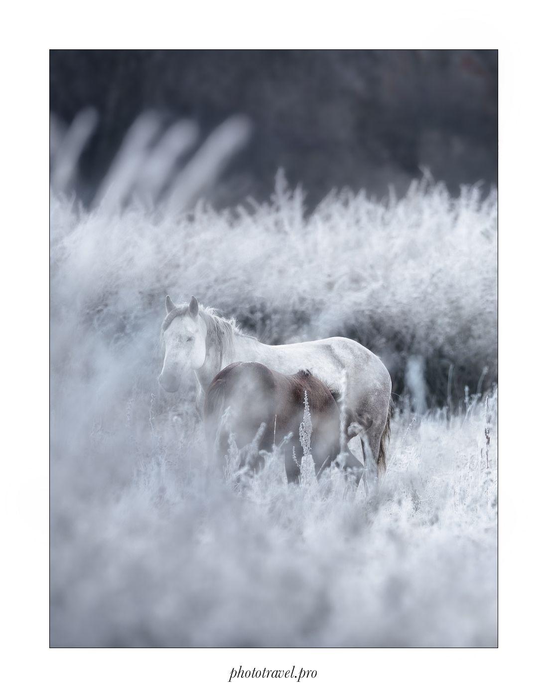 ГРЁЗЫ Алтай Горный домино грёзы нарния domino осень лошади Мульта Мультинские озера Россия Russia Horse autumn