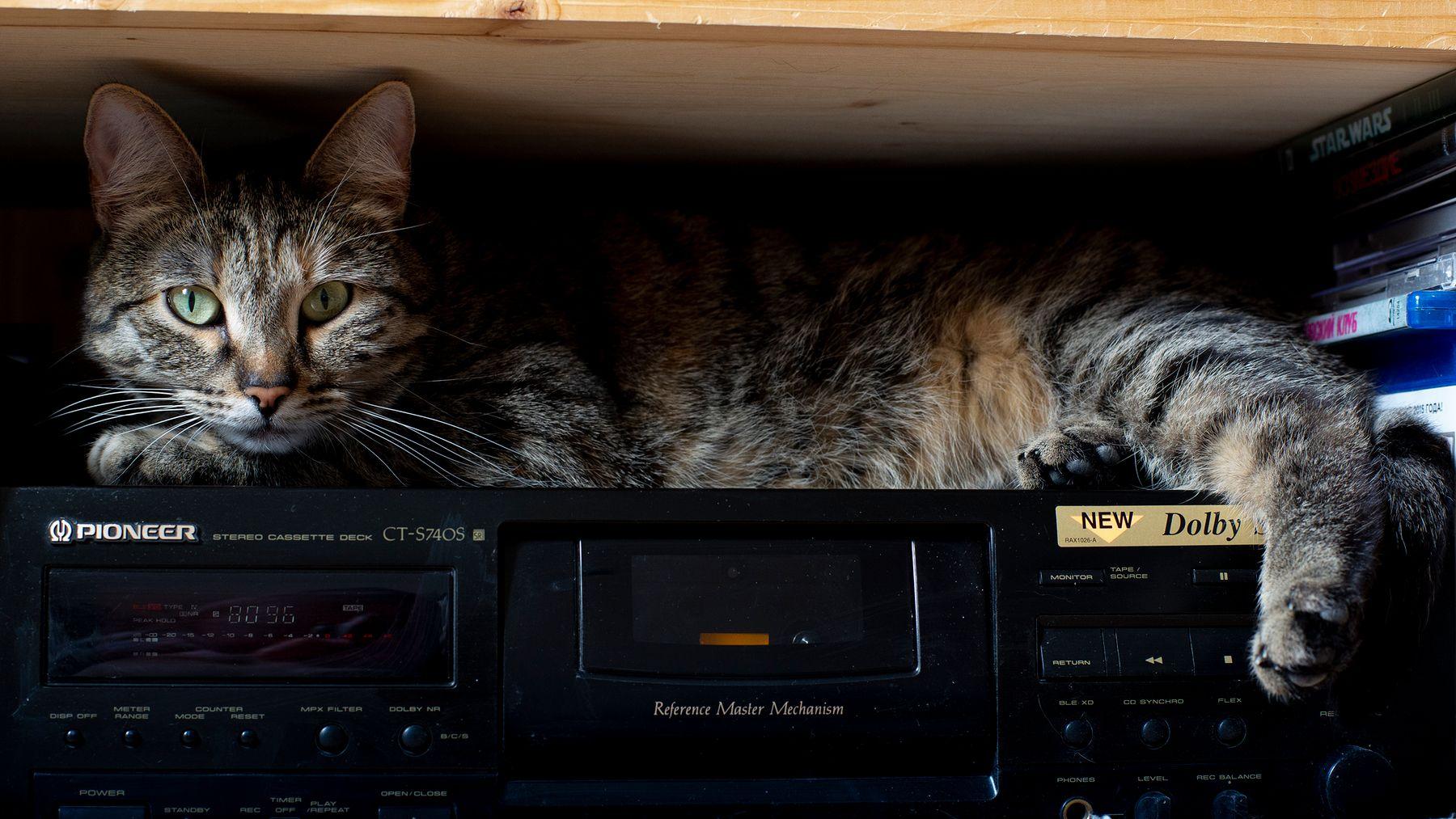 Кошка старого меломана кошка кот усы нос кассетник