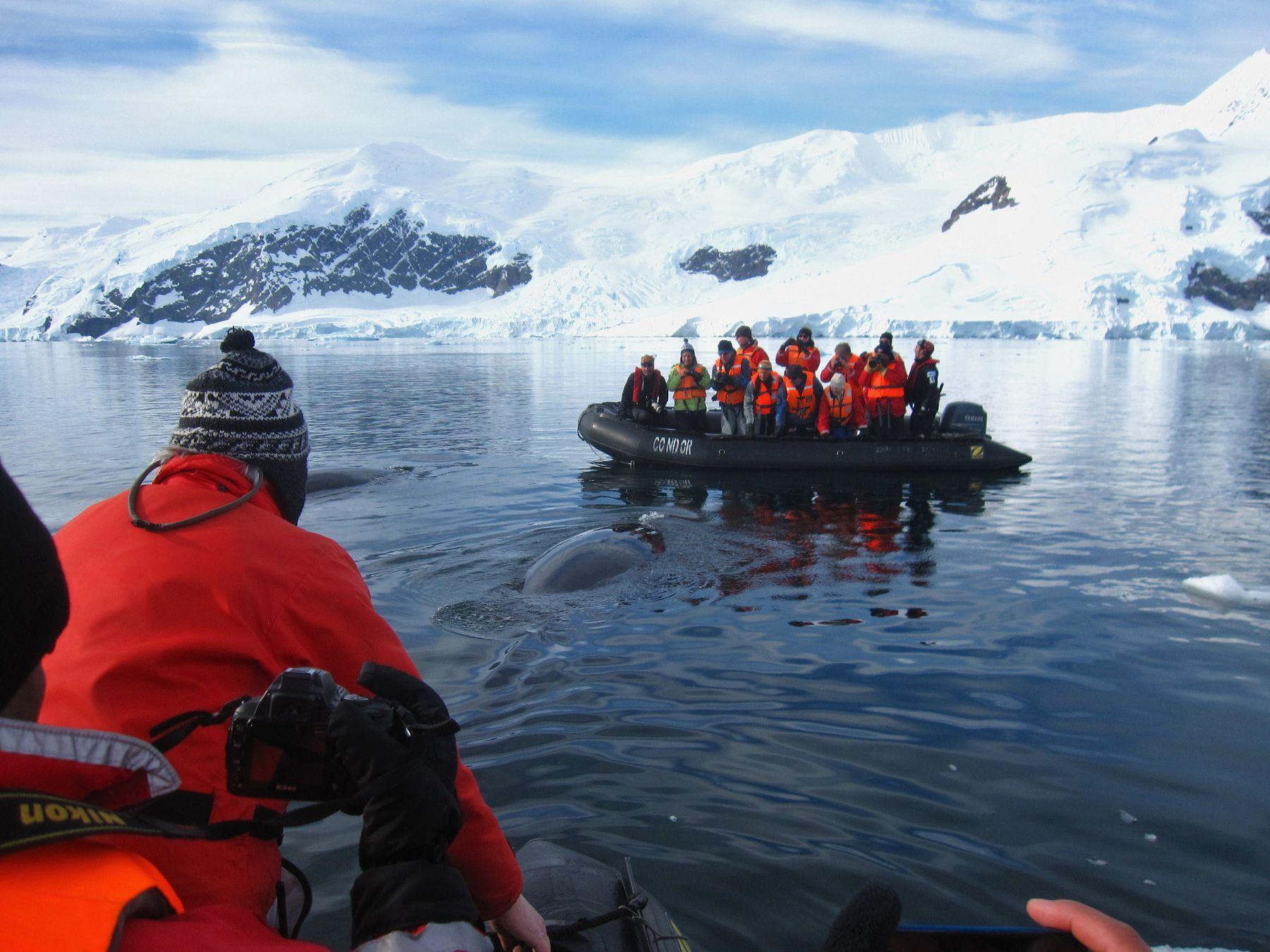 Встреча с малым полосатиком. Антарктида вулкан кратер горы скалы