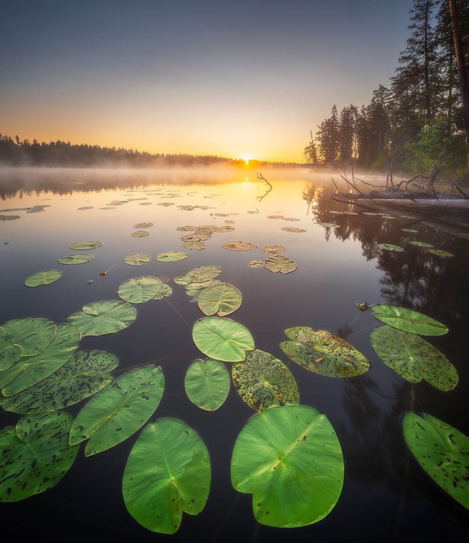 *** восход озеро ленобласть кувшинки