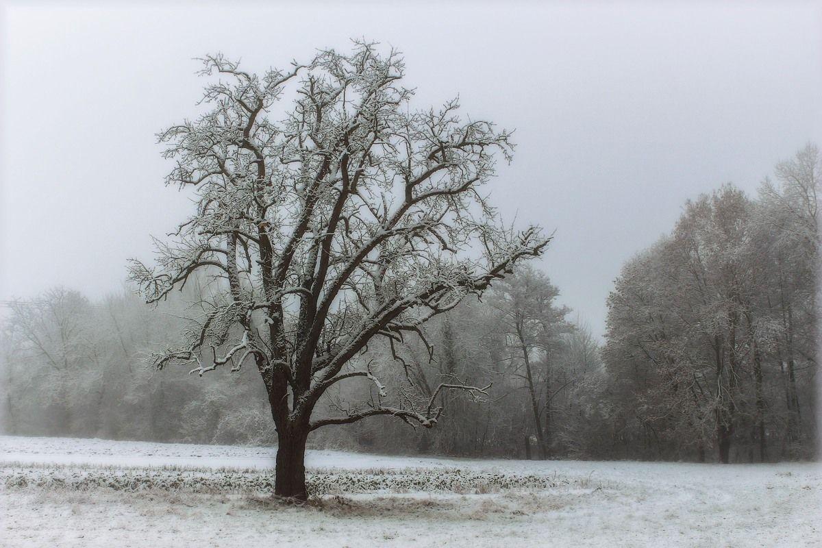Надоело одиночество… Пробираюсь сквозь туман… дерево туман иней