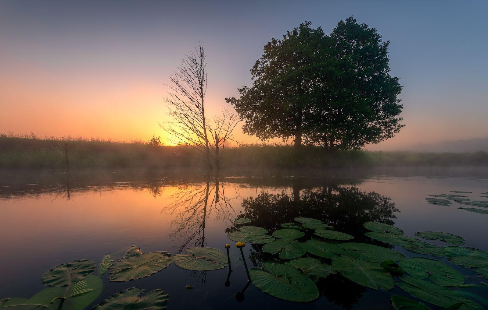 Утренняя утро лето рассвет пейзаж