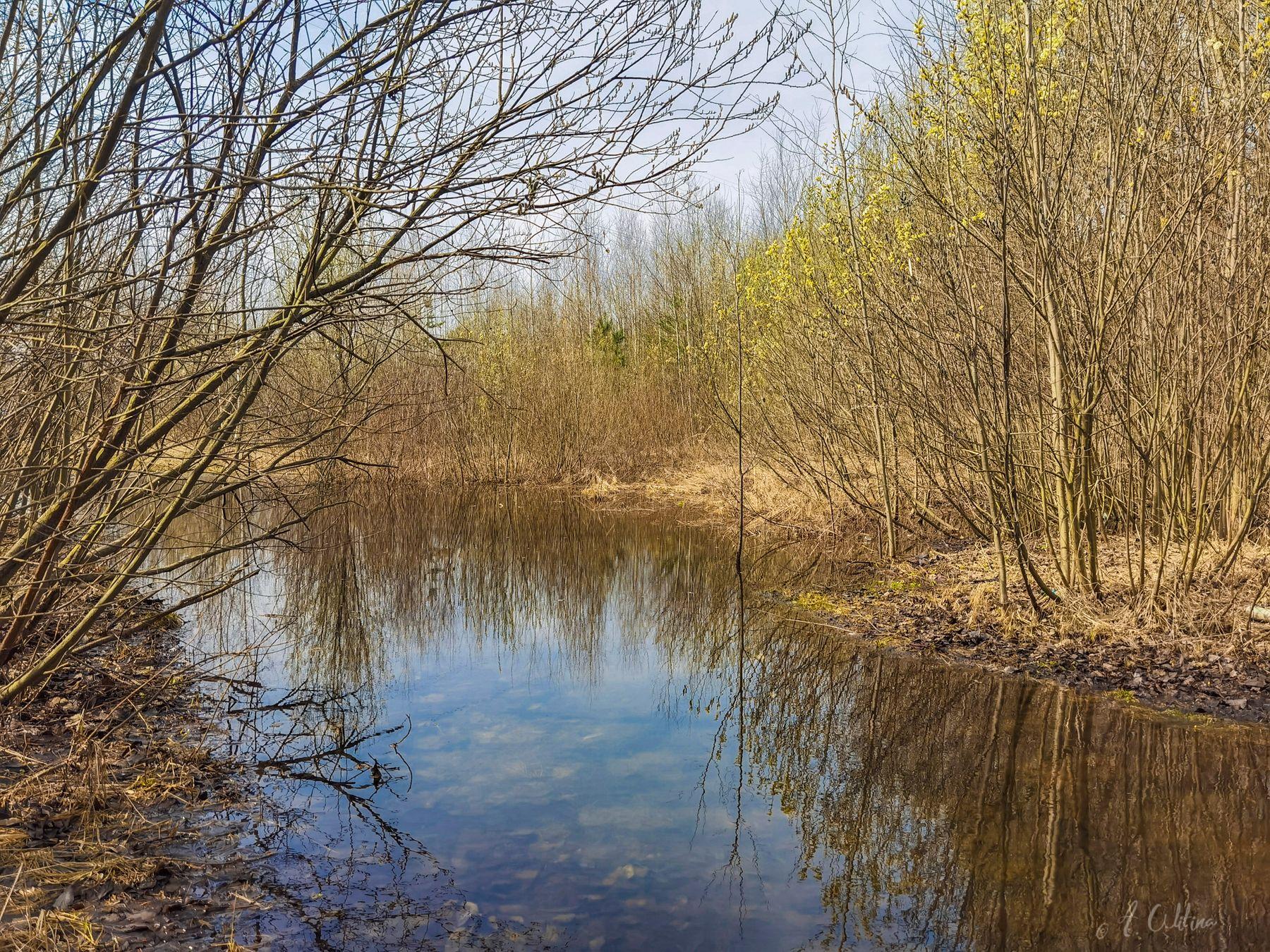 Апрельские дорожки поле лес тропинка лужа вода кусты