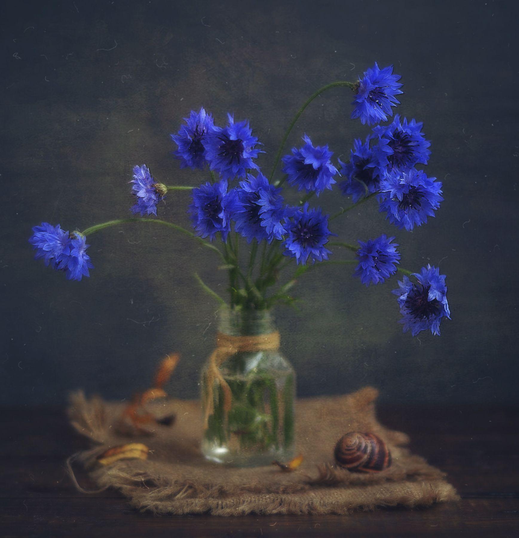 последние васильки... натюрморт композиция васильки цветы ракушка