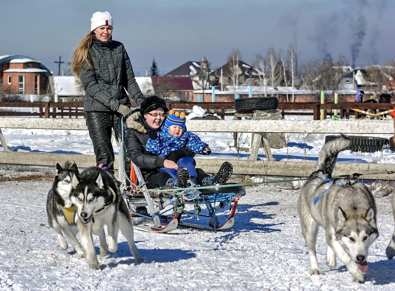 Скиджориг на собаках Сани собаки пассажиры зима развлечение6