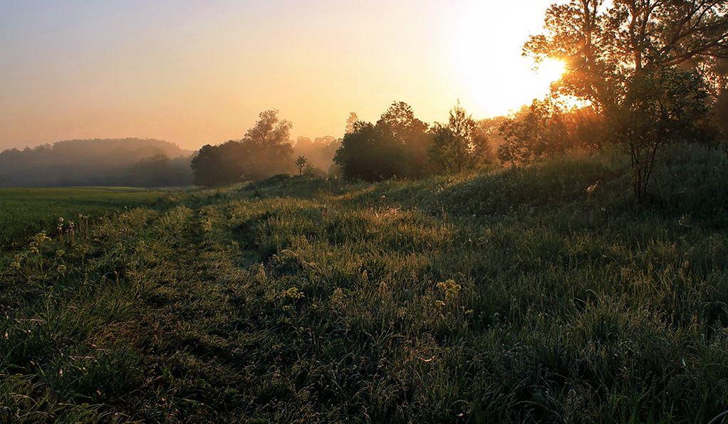 Утренняя свежесть