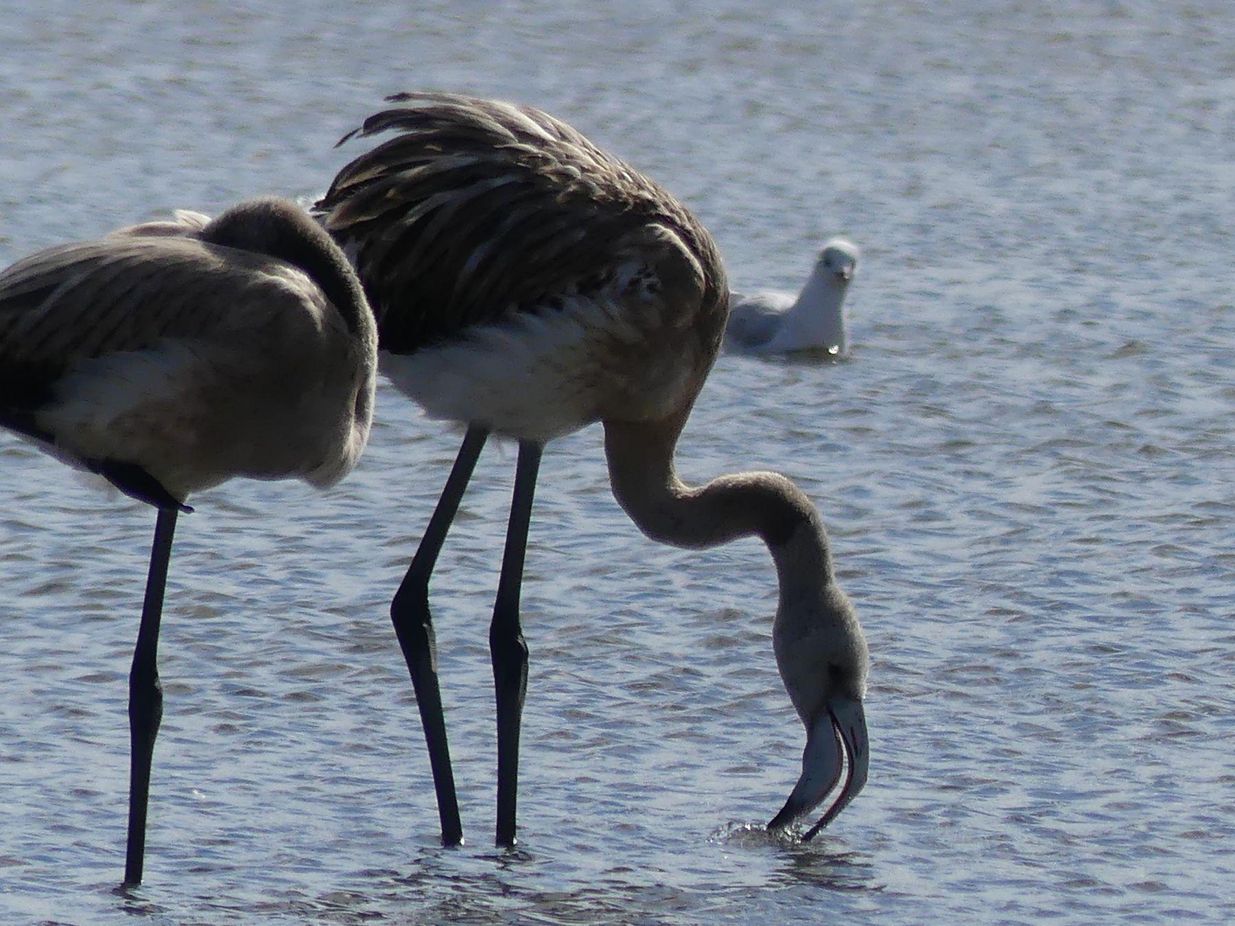 Фламинго. Астана Малый Талдыколь