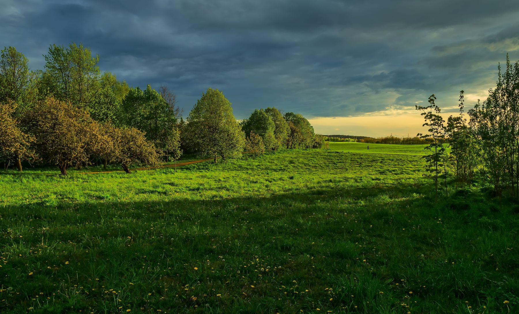 В лучах заходящего солнца вечер закат луг трава небо облака тучи