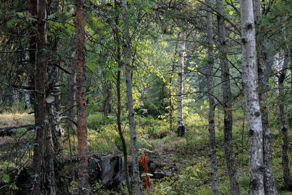 Сказочный лес лес лето