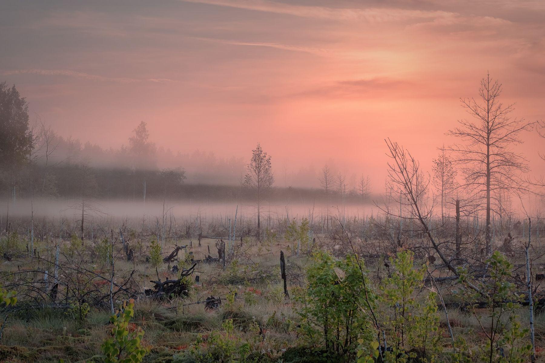 Обитель духов болото рассвет туман деревья коряга пень паутина утро урал пермь