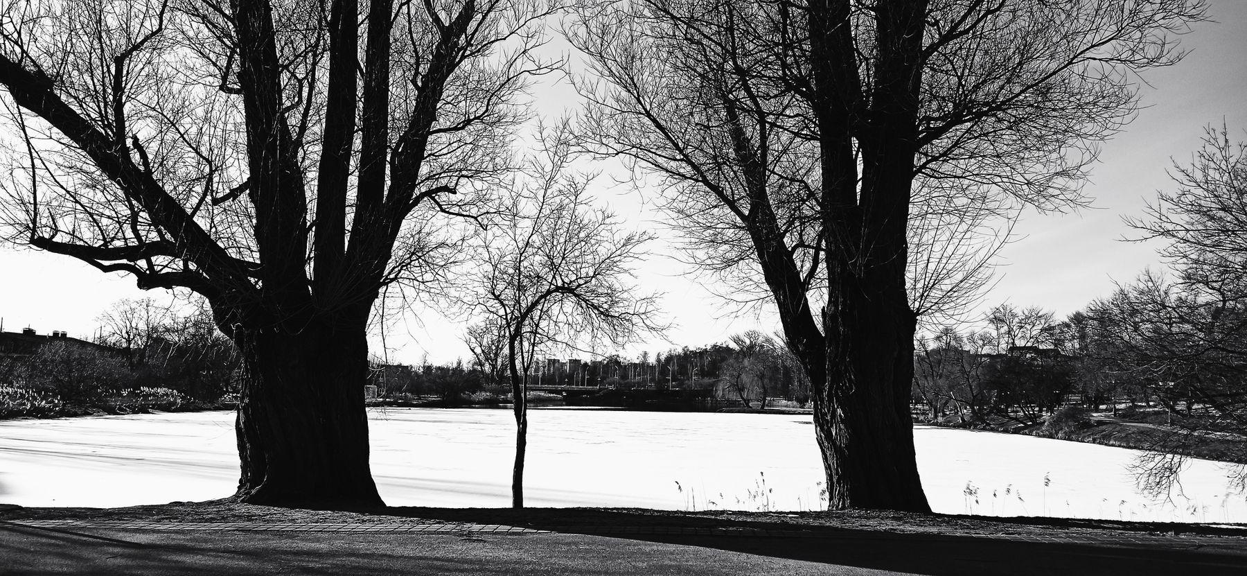 Семья Деревья парк