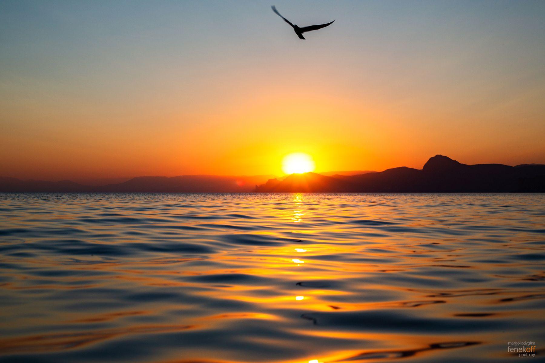 Закат на Чёрном море закат черное море крым чайка мыс алчак солнце путешествие природа sunset crimea sea black cape alchak