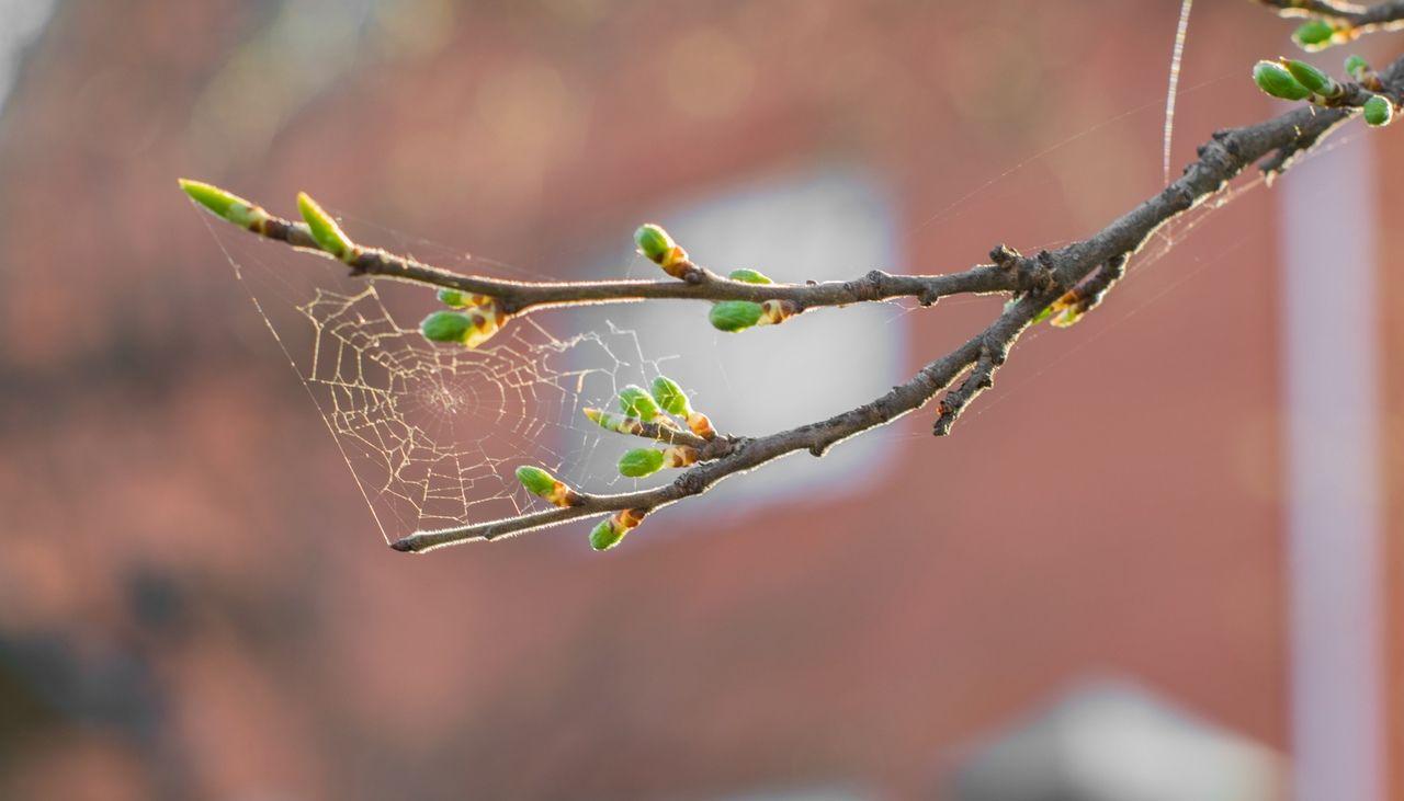 паутинка весенняя паутина
