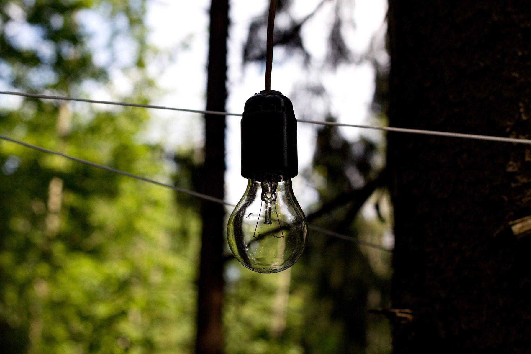 свет в каждый лес