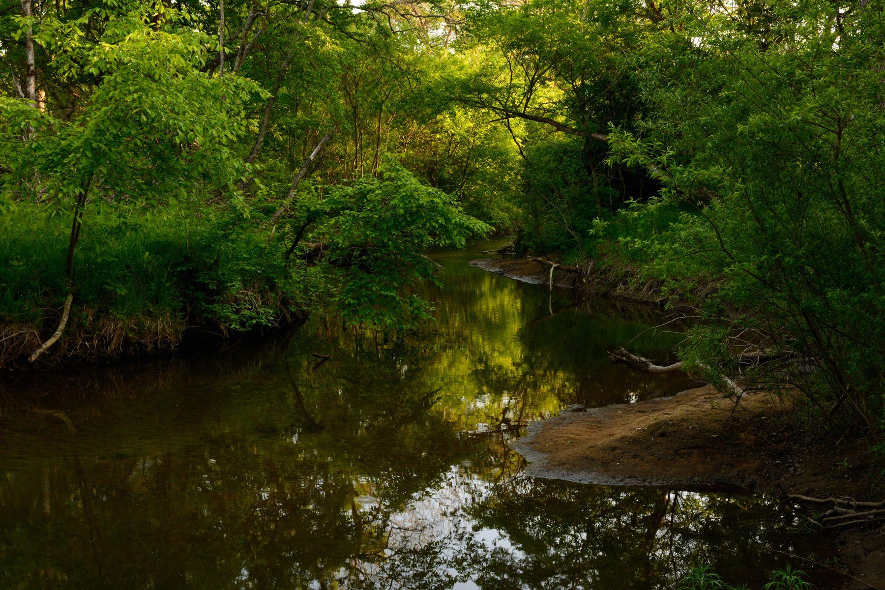 Лесная река.