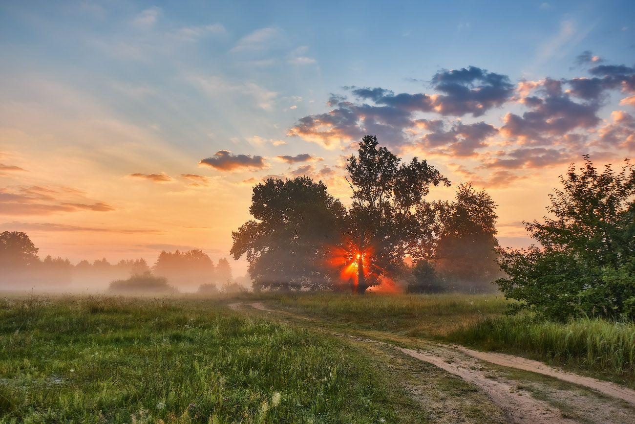 Утро Июля Беларусь Дорога Дубрава Июль Лето Луга Рассвет Туман Утро