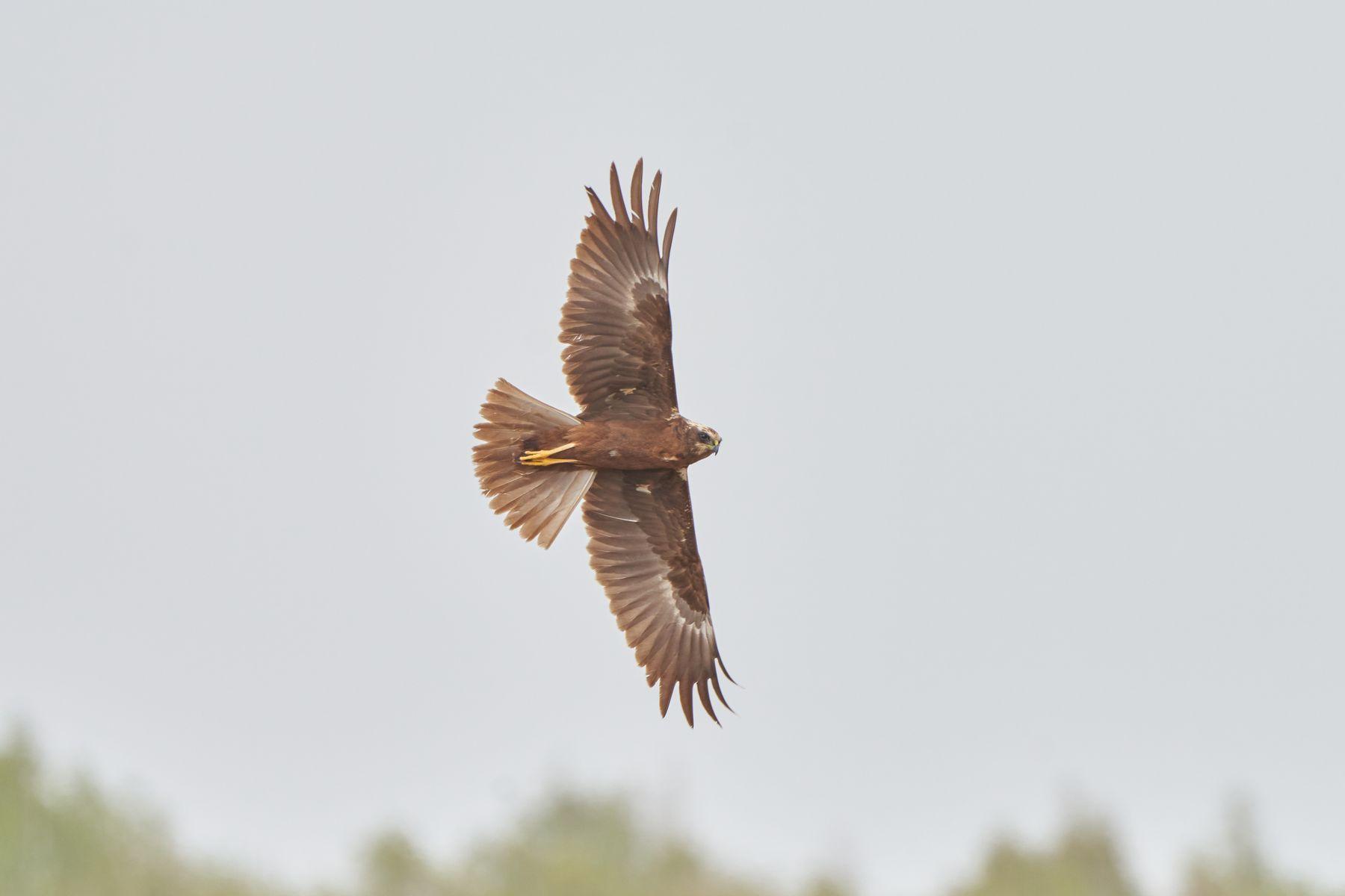 Свободный полёт Птицы природа весна фотоохота