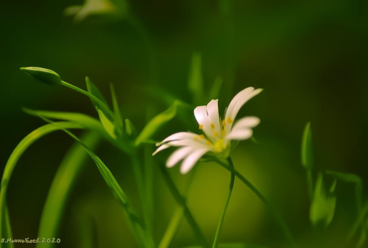 Цветы весенние природа весна лес