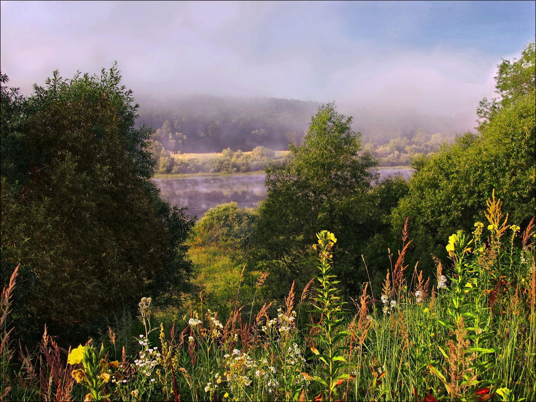 Летние зарисовки, 2 утро туман деревья трава даль берега