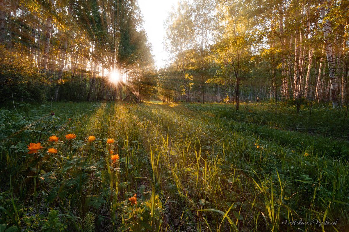 Доброе утро. утро природа лес солнце цветы