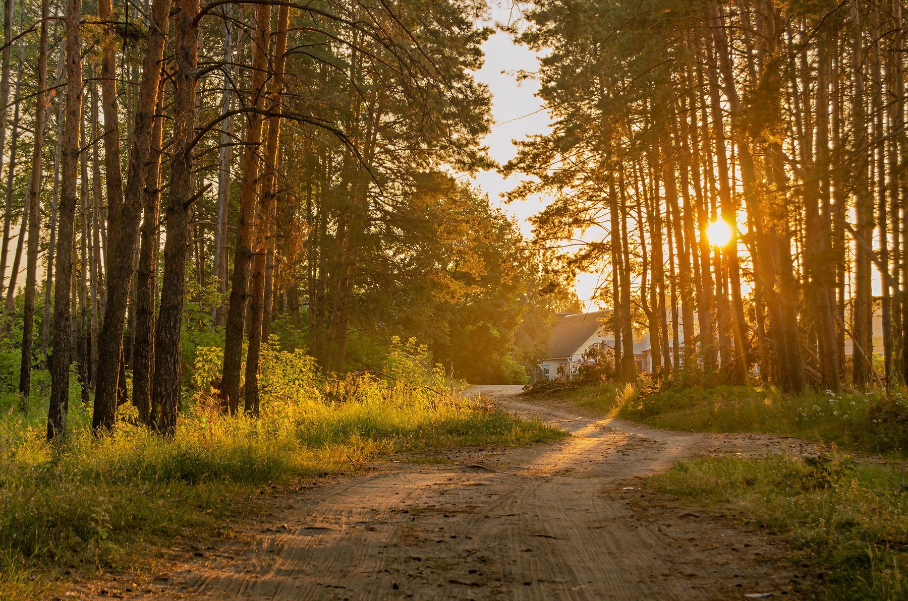 Встречая утро утро солнце дорога лучи