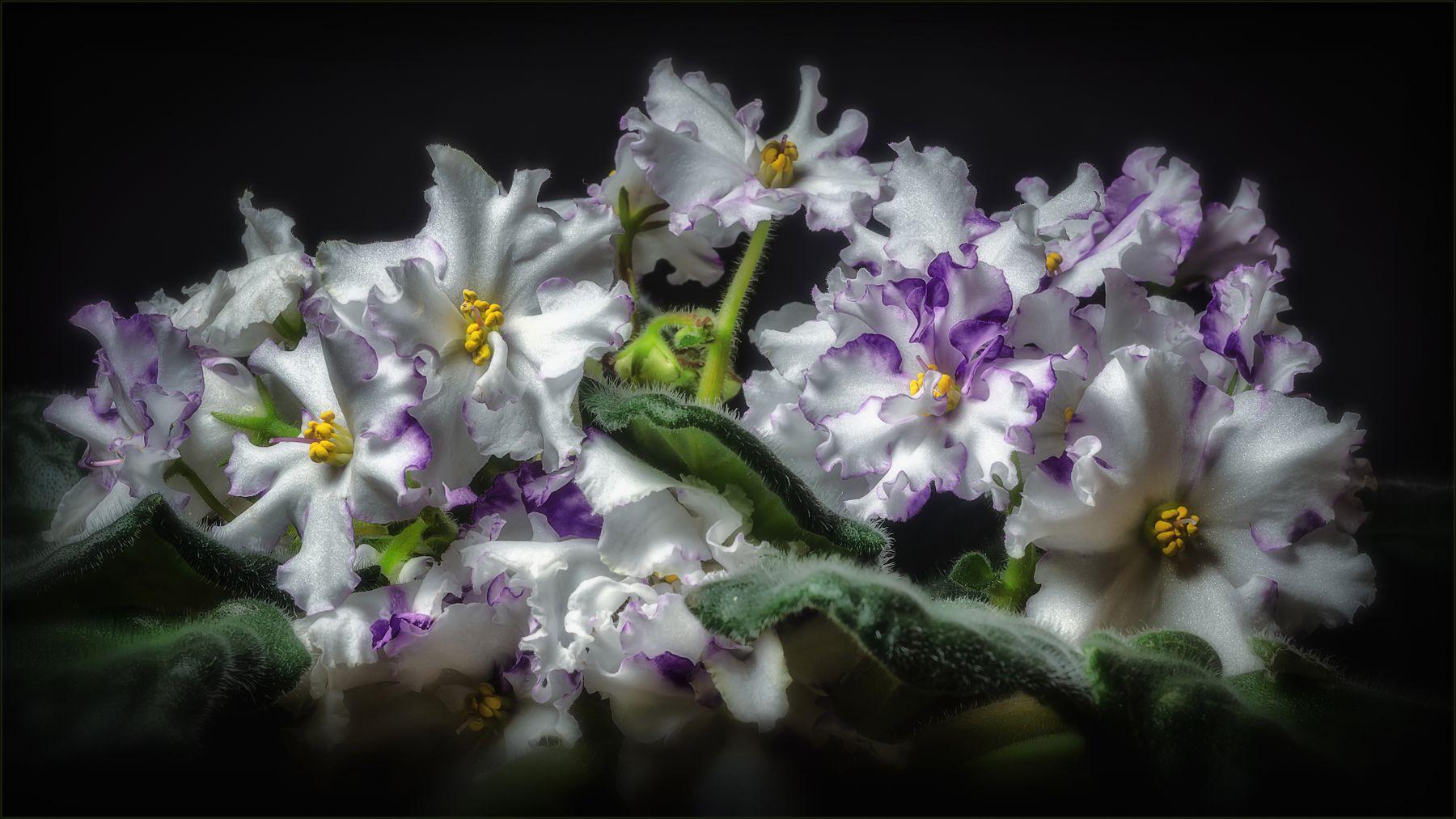 Весна на подоконнике. весна цветы макро