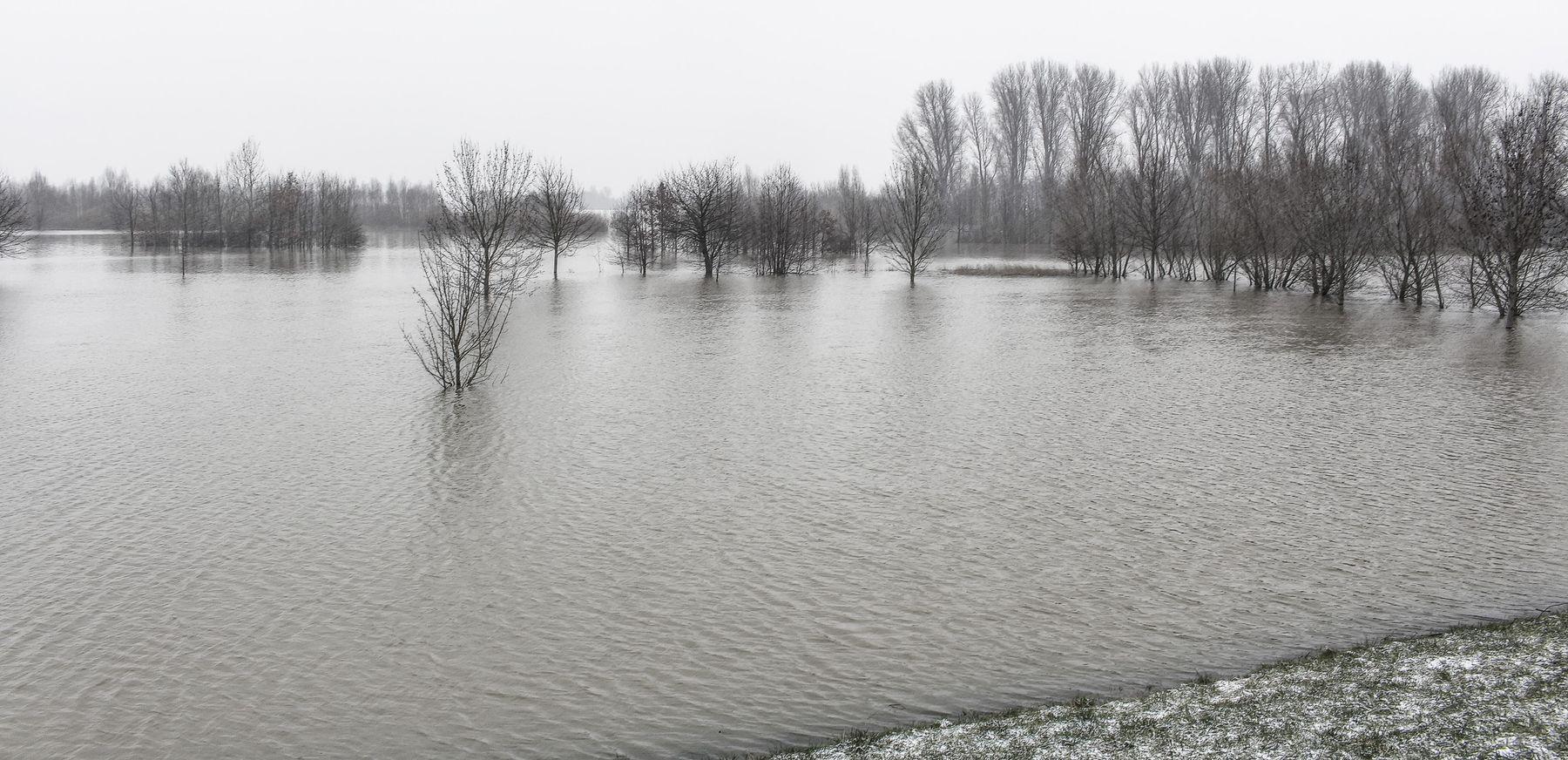 Рейнский разлив