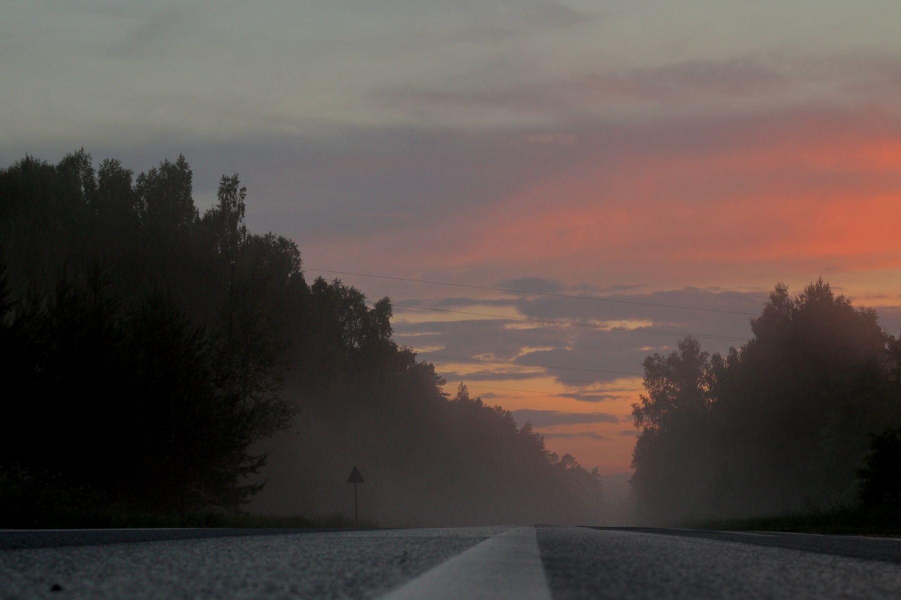 Туман туман дорога лес