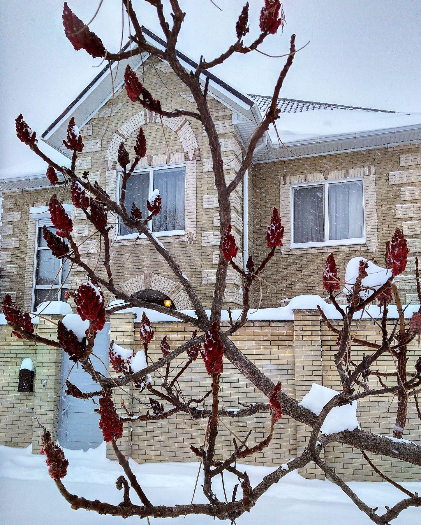 Яркий акцент холодной зимой фотография дневник настроение юмор ирония природа пейзаж зима снег дом сумах