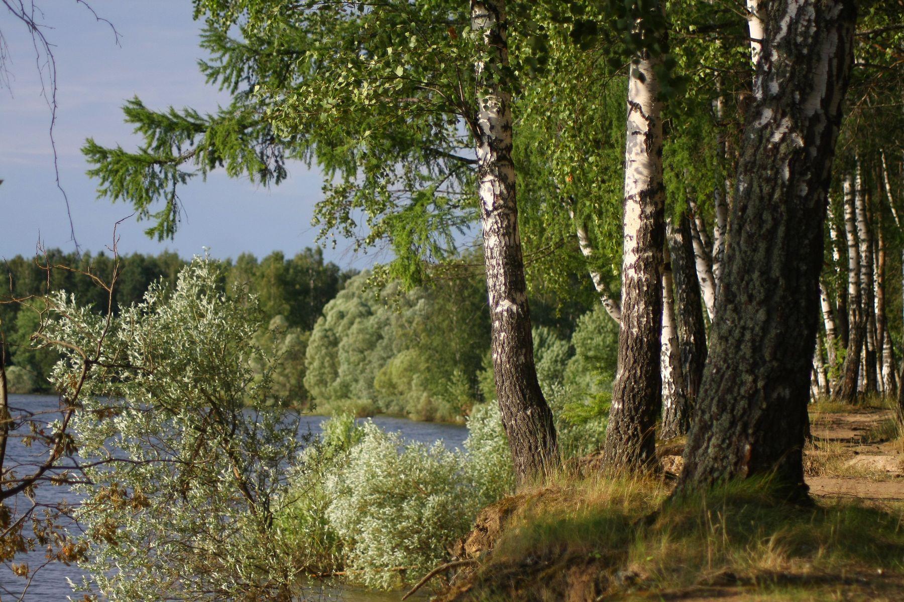 На берегу Можайского водохранилища