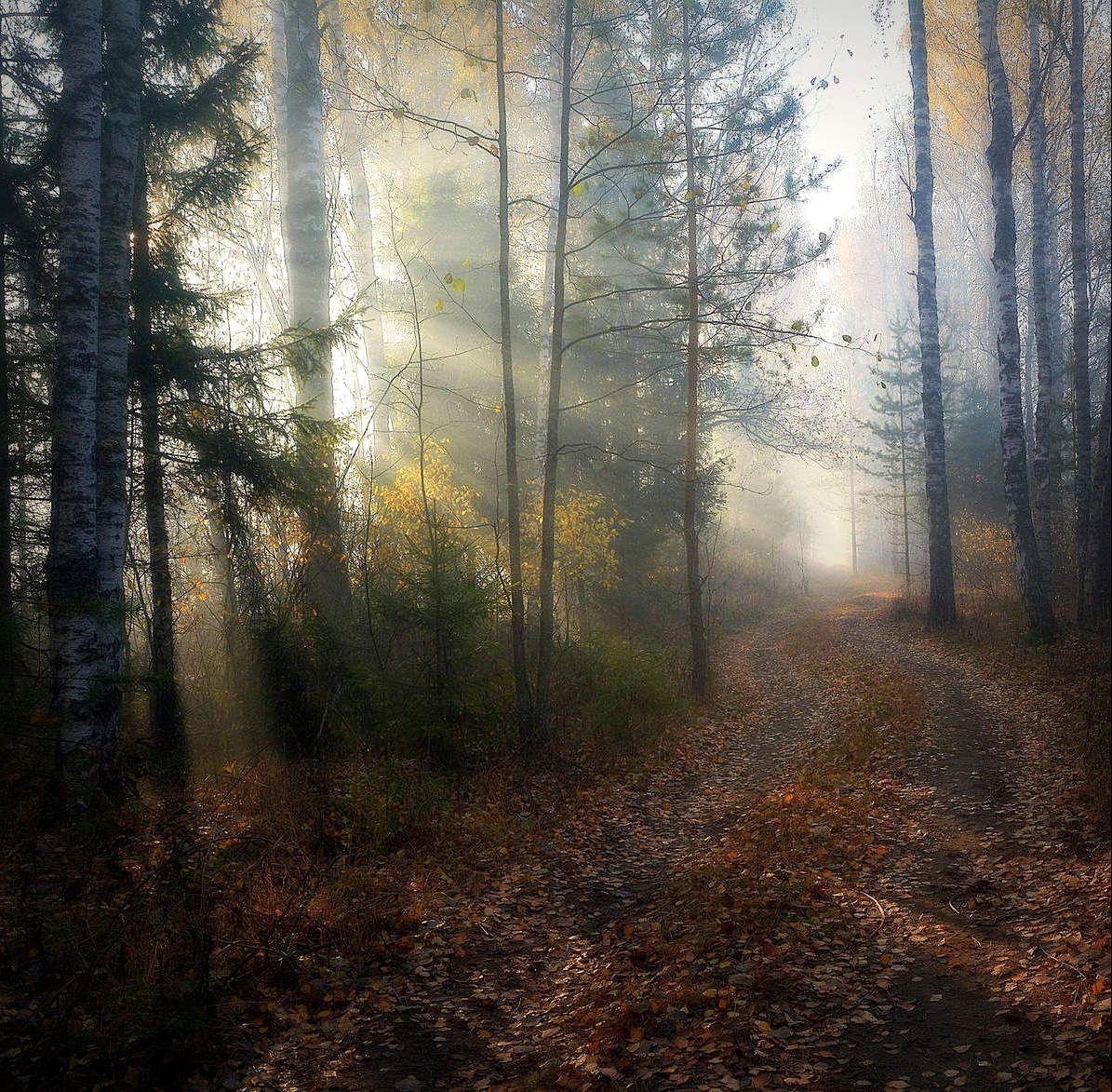 Грибные места Сергей Алексеев пейзаж